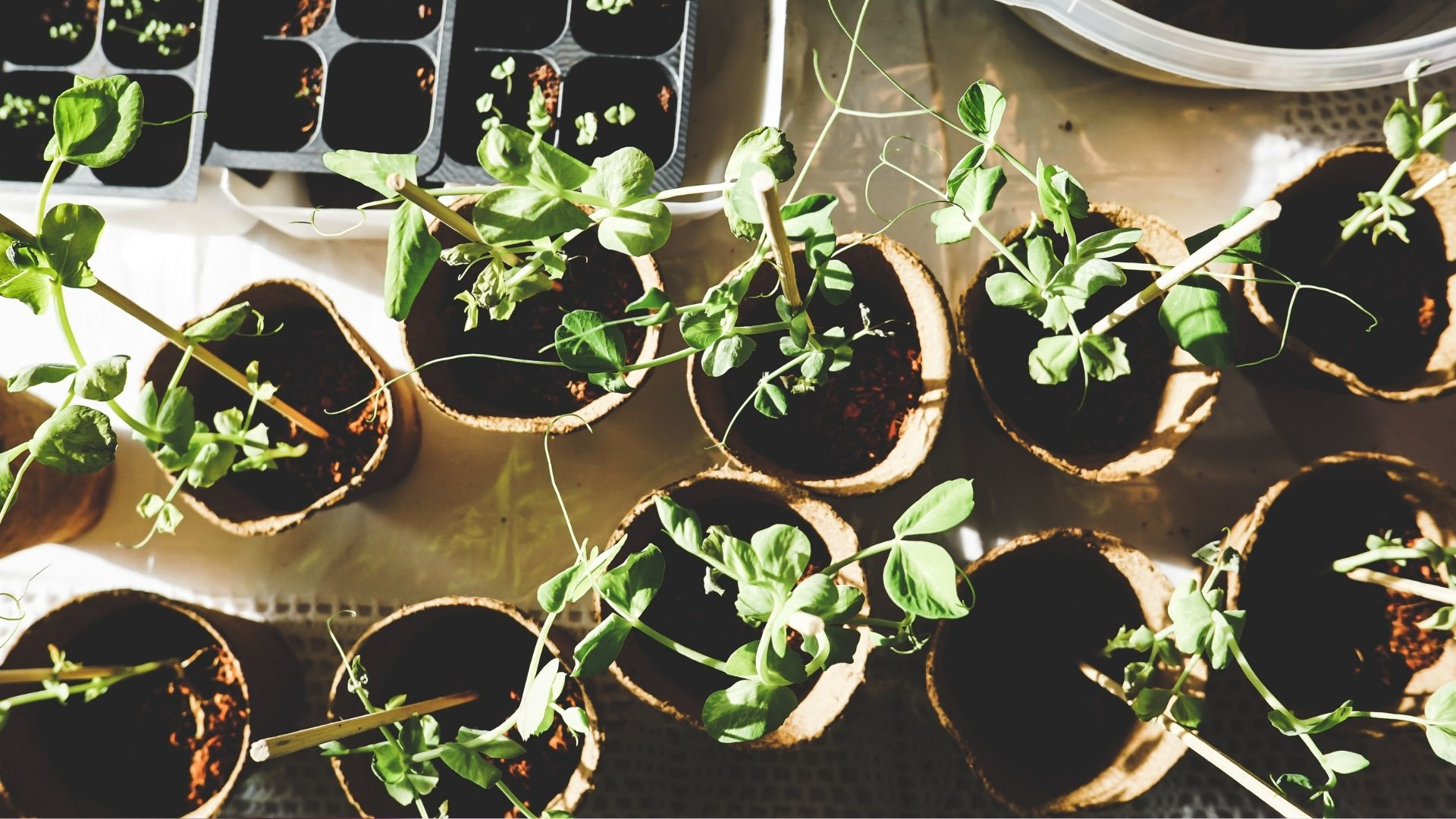 Plant seedlings which symbolise business growth